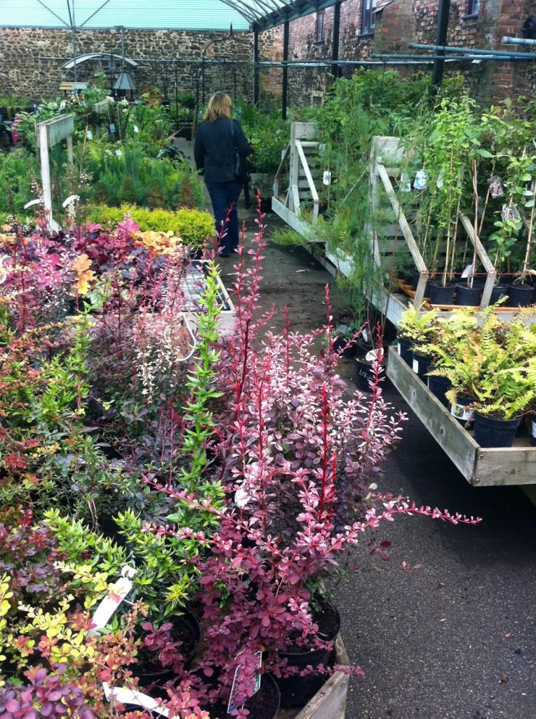 Plants and customer