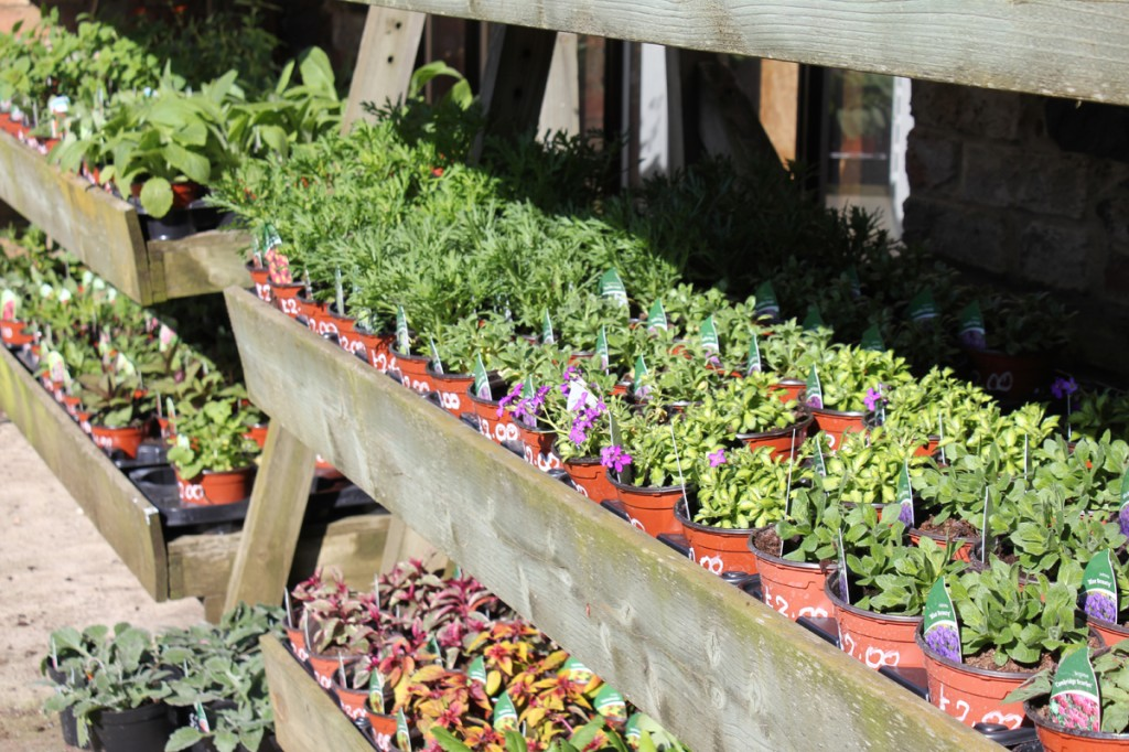Pot Plants Close Up